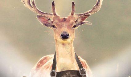 Am 25. Oktober röhrt der Hirsch zum letzten Mal am Pöstlingberg