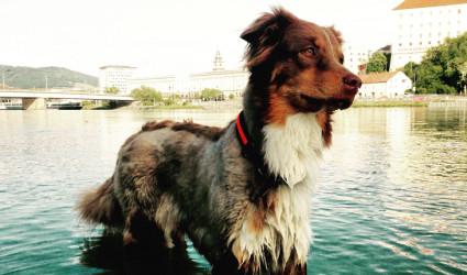Linz geht baden… auch mit Hund!