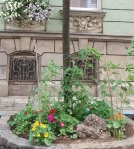 """Fotobeweis: Platz für ein """"Blühendes Linz"""" ist immer und überall!"""