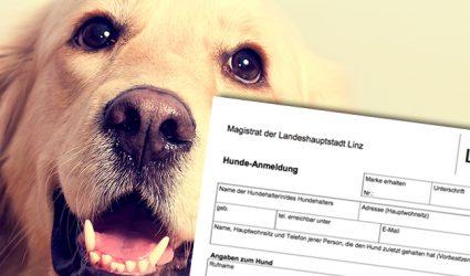 """4.000 """"U-Boot Hunde"""" in Linz?"""