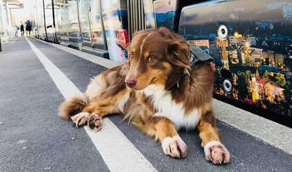 Linz Linien: Hunde zahlen mehr als Zweibeiner