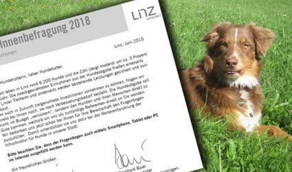 Linzer Hundebesitzer sollen mitreden