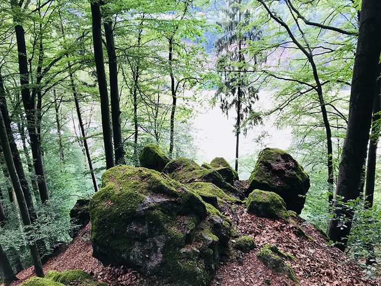 Prinzensteig_770-3031