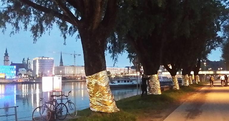 Die geretteten Bäume an der Heinrich-Gleißner-Promenade – von der Baumrettungsinitiative mit Rettungsdecken geschützt