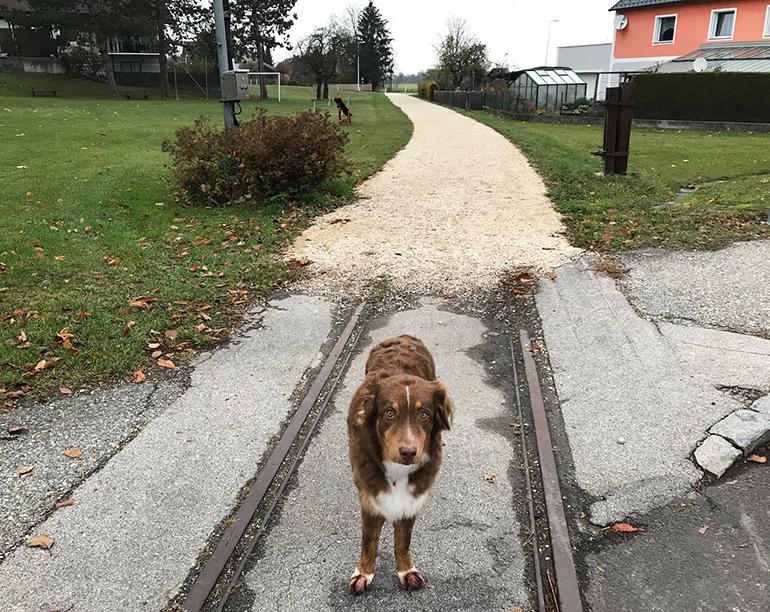 """Erste Planierungsarbeiten auf der Florianen Bim-Trasse wurden bereits durchgeführt. Aktuell herrscht dort aber noch nur """"Gassiverkerkehr""""..."""