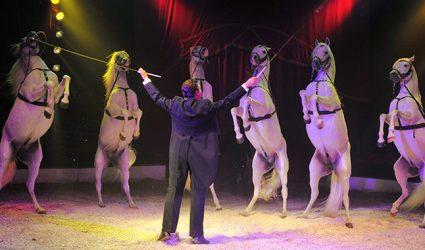 Vorhang auf für den Circus Louis Knie!